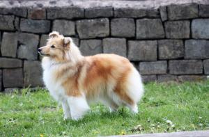 Limit-Dog