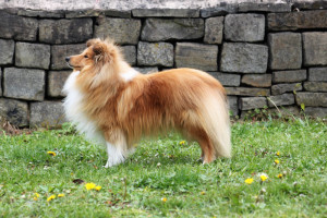 junio dog